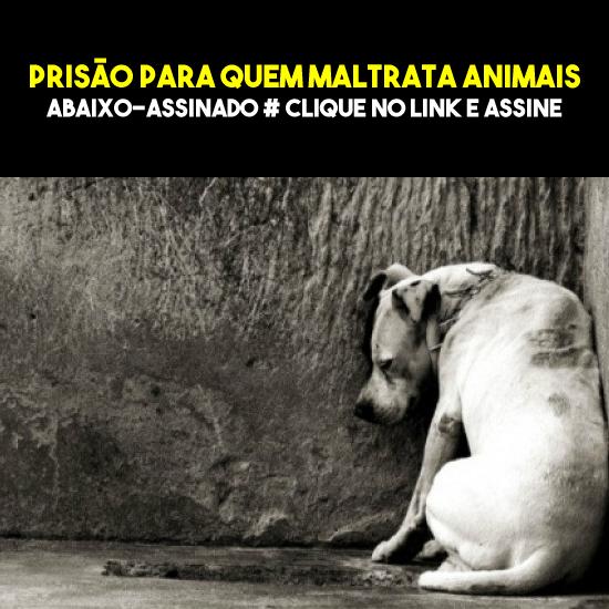 Propostas: Prisão em regime fechado contra violência aos animais