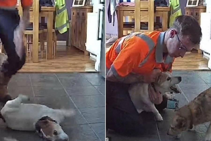 Momento do flagra foi registrado por câmeras na casa do tutor do cão/ Imagem: Reprodução Internet