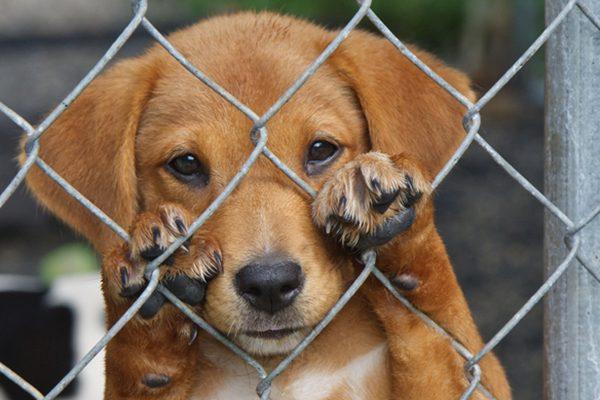 Propostas - Maus Tratos aos Animais - Bruno Ganem