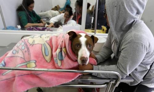 Hospitais Veterinários Públicos - Bruno Ganem - Estado de São Paulo