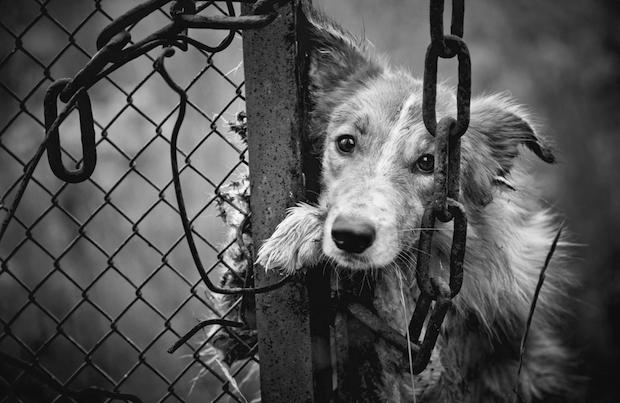 Prisão para quem maltrata animais