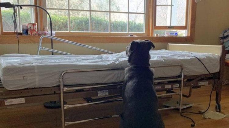 Cachorro espera volta de seu dono ao lado de cama hospitalar/ Imagem: Reprodução internet