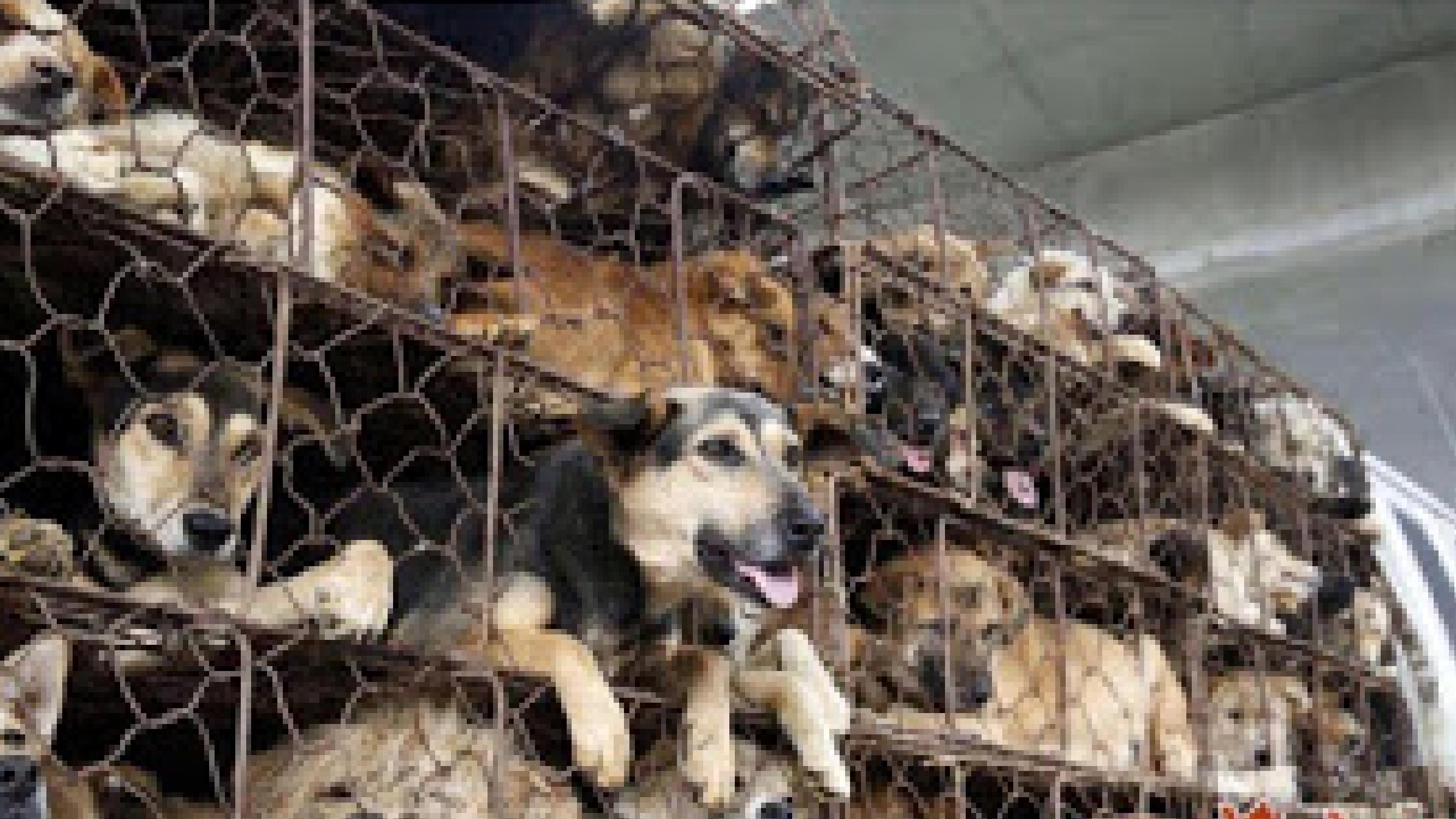 Festival de Cachorro na China