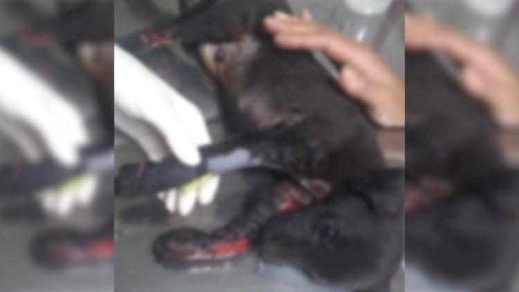 Cachorro atropelado é jogado vivo em lixeira/ Imagem: Reprodução Internet