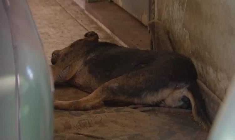 Em resgate comovente, um animal já foi encontrado morto/ Imagem: Reprodução Portal G1