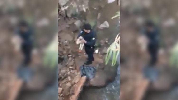 Imagem mostra filhote jogado em rio sendo resgatado