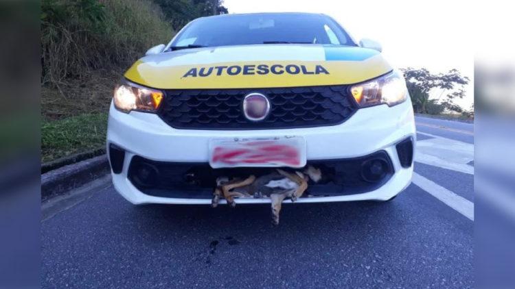 Cachorro é atropelado e fica preso em veículo. Desfecho é surpreendente/ Imagem: Reprodução internet