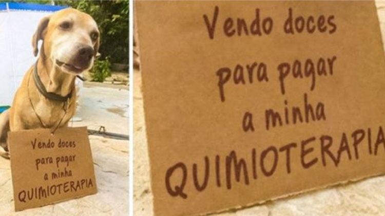 Cachorrinho com câncer vende doces para pagar tratamento/ Imagem: Internet