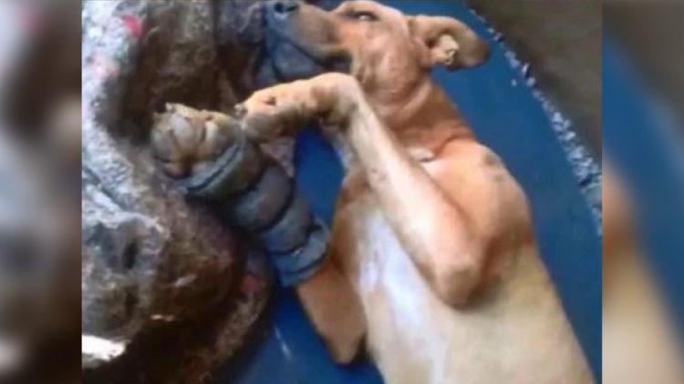Cachorro acidentado se recupera e será adotado