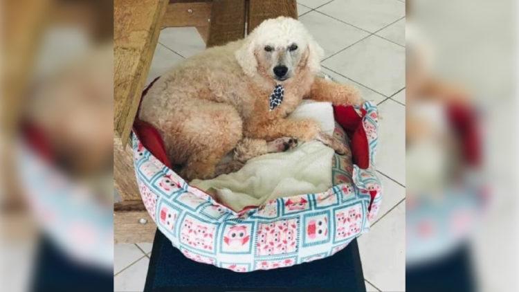 Cachorro foi perseguido até ser atropelado/ Reprodução: Internet