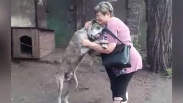 Emocionante reencontro de cachorro desaparecido por anos/ Imagem: Reprodução internet