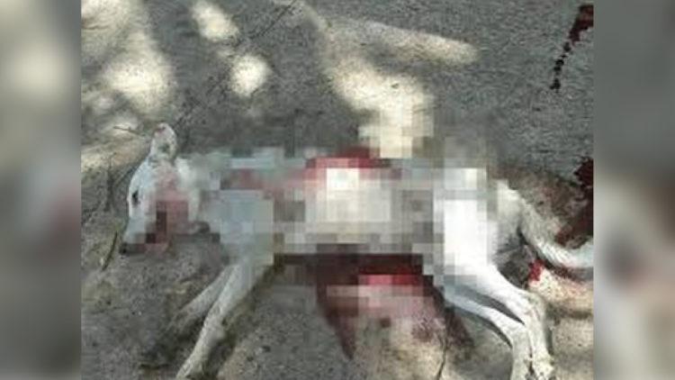 Alvejado: denúncia por cão tem desfecho e gera expectativa/ Imagem: Reprodução Internet