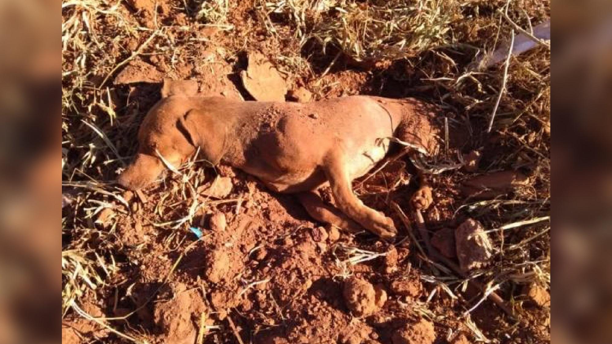 Como morto: terrível ato contra cão repercute e deixa auxílio em aberto/ Imagem: Reprodução Internet