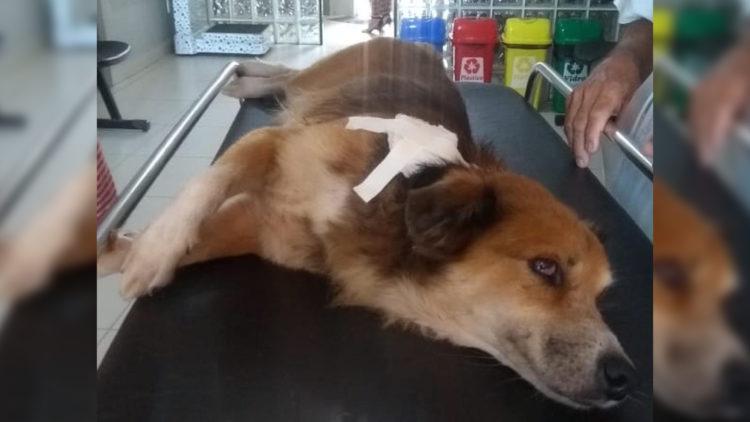 Solidariedade: Cachorro atingido em assalto comove para tratamento/ Reprodução: Internet