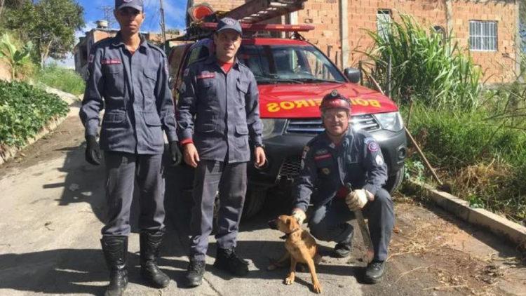 Cachorro é salvo em acidente com ato heroico dos Bombeiros/ Imagem: Reprodução