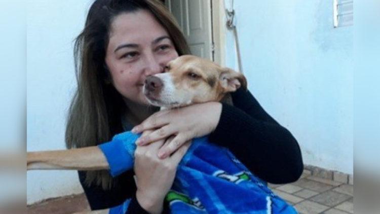Concluída mobilização por cão que sumiu em rodovia após capotamento/ Reprodução: Internet
