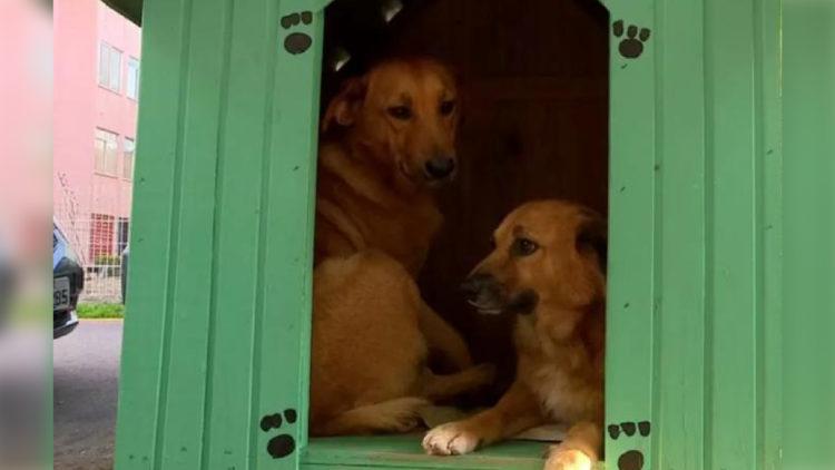 Vitória: justiça suspende remoção de casinhas para cães de rua/ Imagem: Reprodução Internet