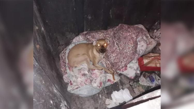 Flagrante: Cachorro é despejado em lixeira e salvo por testemunhas/ Imagem: Reprodução Internet