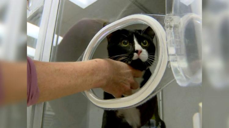 Por descuido, gato fica preso durante uma hora em máquina de lavar ligada/ Imagem: reprodução internet