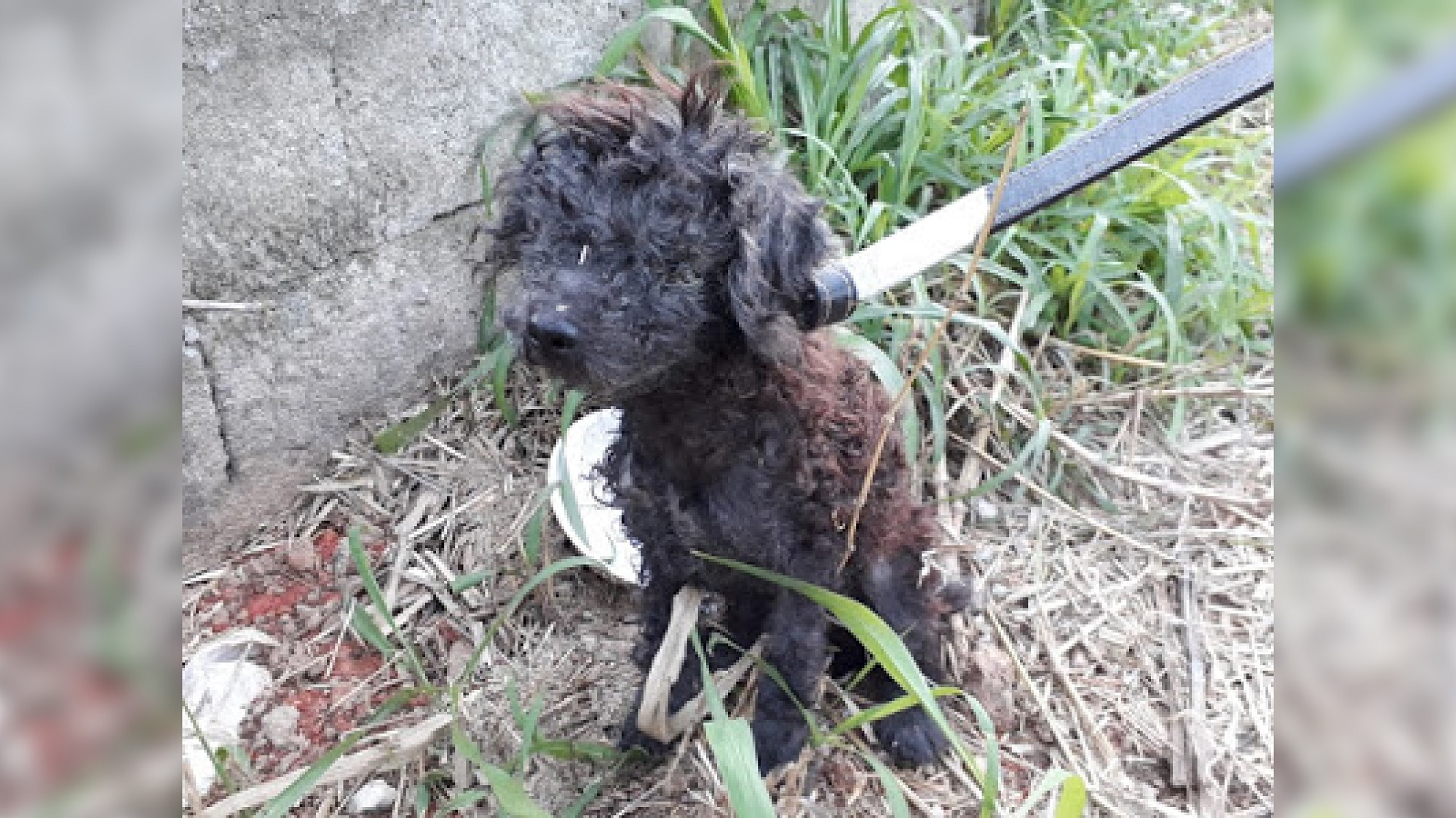 Desespero de cão ao ser resgatado salva companheira esquecida doente/ Imagem: Reprodução internet