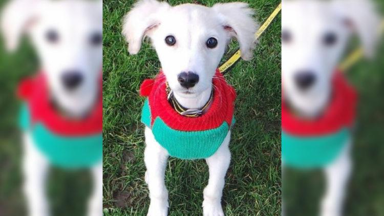 Idosa de 89 anos faz 450 roupinhas para cachorro de abrigo/ Imagem: Reprodução Internet