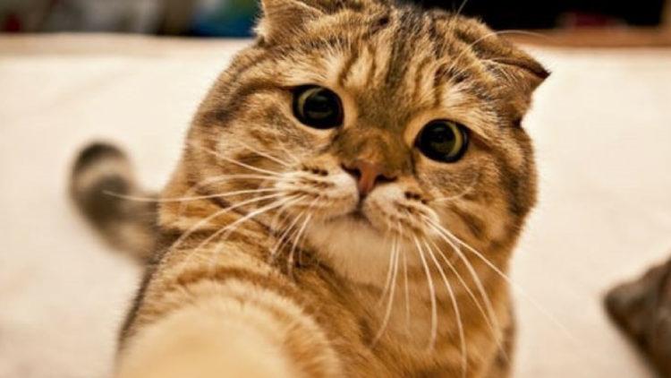 """Tinder pet permite achar novos """"donos"""" para pets abandonados/ Imagem: Reprodução internet"""