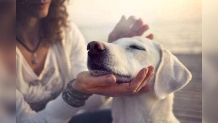 Comprovado: acariciar cães e gatos têm efeitos surpreendentes na saúde/Imagem: Reprodução Portal Amo Meu Pet