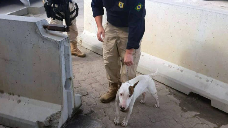 Cão agredido é resgatado em rodovia e desfecho sensibiliza a todos/ Imagem: Reprodução Internet