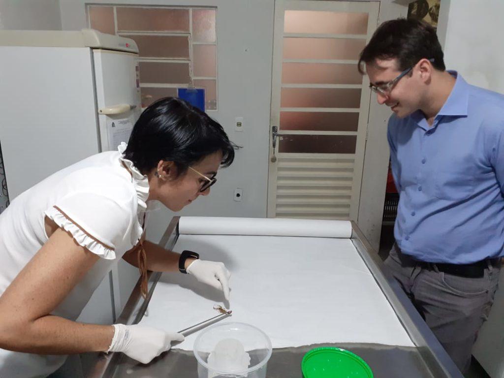 Dra. Ana explica sobre combate aos escorpiões